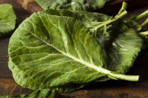 collard-greens-food-rich-in-calcium-doctorfolk