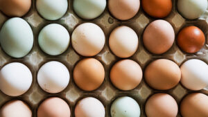Eggs_Health_Article_Doctorfolk