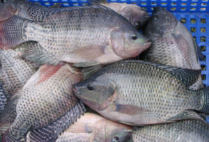 Fatty_Fishes foods rich in vitamin E