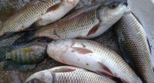 Fish_Health_Article_Doctorfolk
