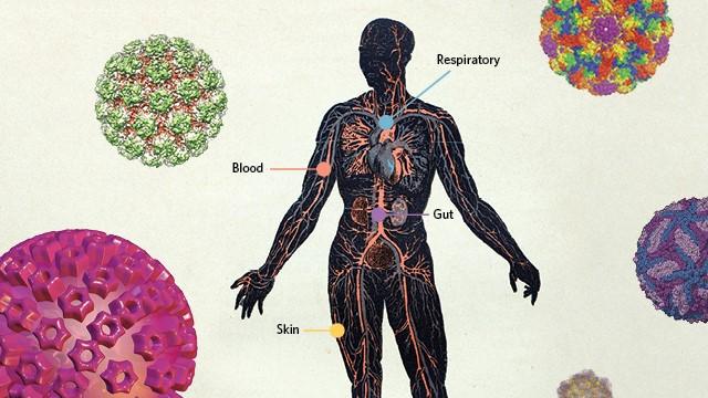 Is ziverdo prevent viruses